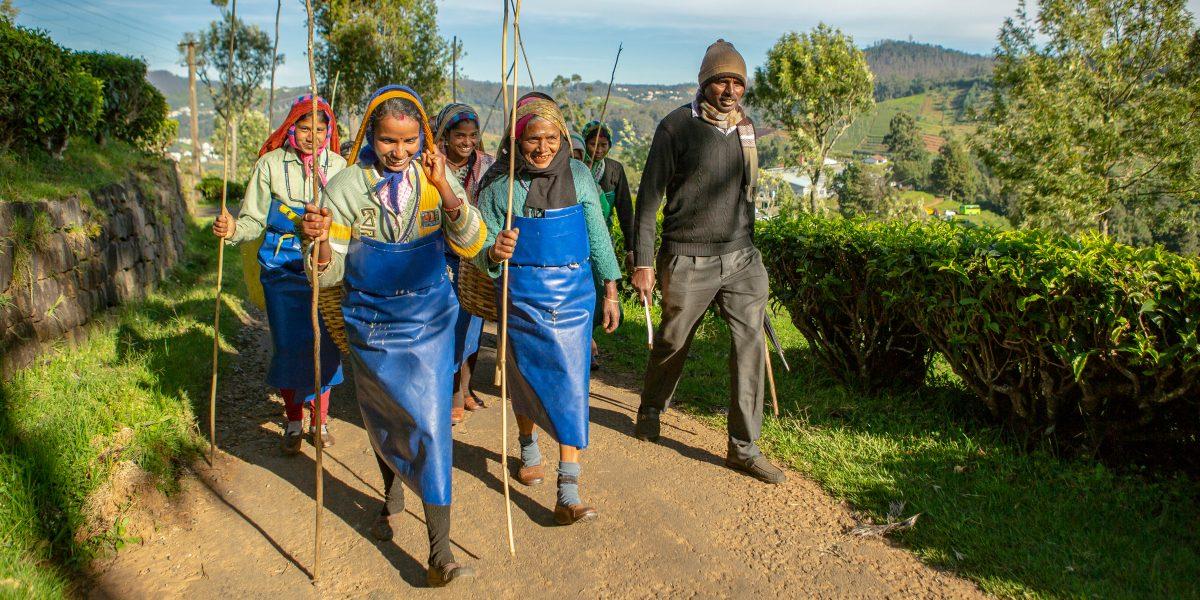 why is fairtrade tea better - assam tea workers