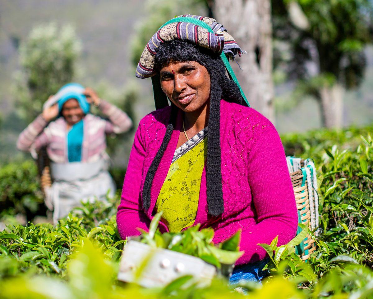 Saraswathy plucking tea Dunsandle