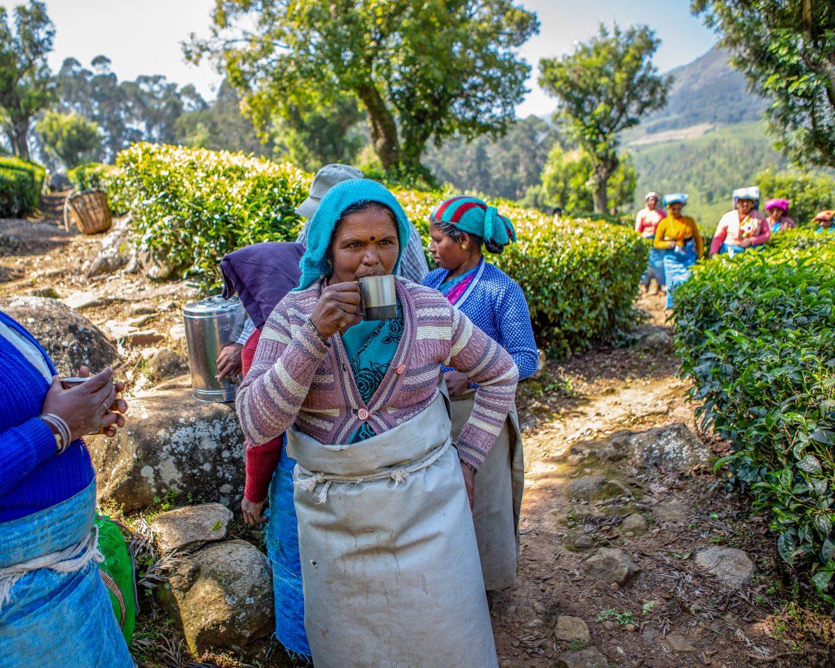 Susheela tea plucker Dunsandle Estate