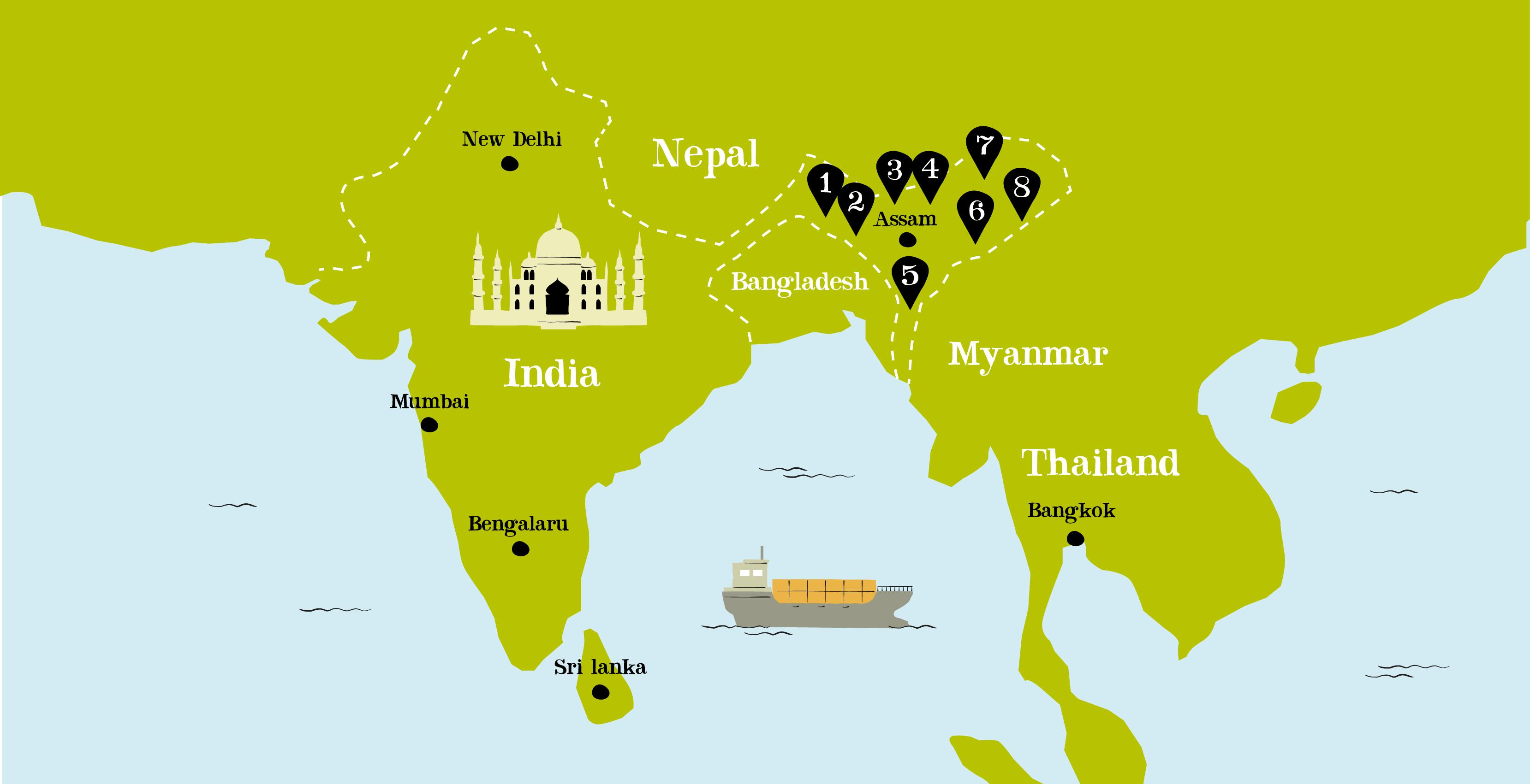 What is Assam Tea? - Clipper Teas